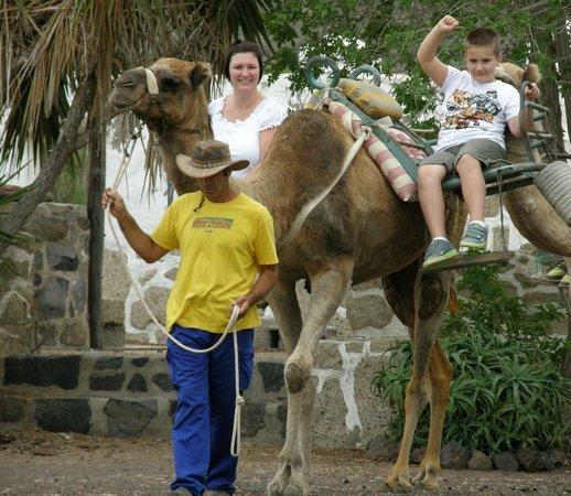 Camel Park: camel ride