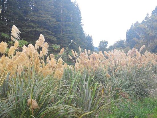 Hamurana Springs: reeds