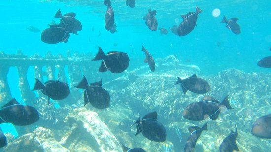 Cocos Seaview Apartments: snorkeling off rays boat