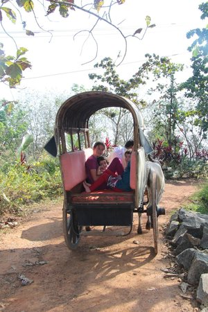 Serenity at Kanam Estate: Bullock cart ride
