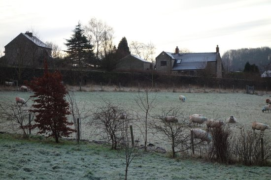 Pear Tree Farm: View from our bedroom