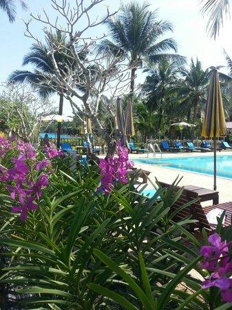 The Kib Resort & Spa: pool and beach