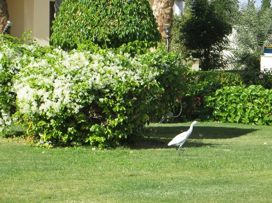 Island Garden Resort: Bird in the Garden