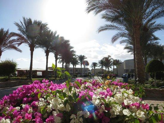 Island Garden Resort: Promenade