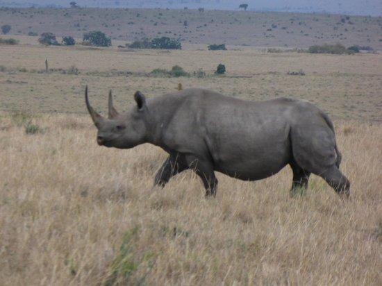 Mara Bushtops: We were lucky we saw 4 Rinos