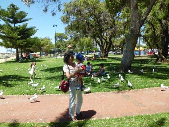 Churchill Park: Feeding the Hungry Seagull