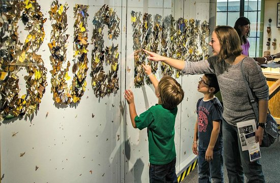 Buffalo Museum of Science: Explore over 1,500 bug and insect specimens in Bug Works