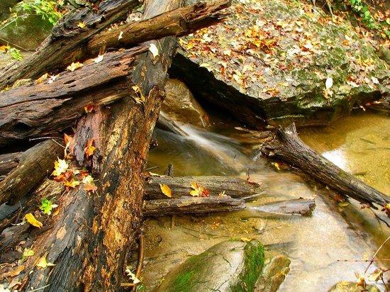Baltimore Woods Nature Center Trails : Bolder Brooke
