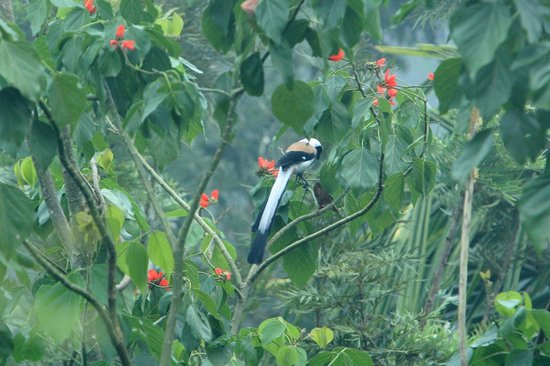 Wild Corridor Resort and Spa by Apodis: sighted Grey Treepie at room balcony