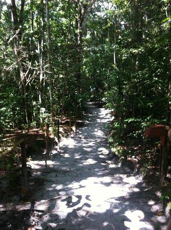Amazon Ecopark Jungle Lodge: Caminho para piscina natural