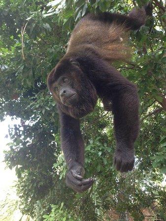 Sandos Playacar Beach Resort : Les beaux singes gourmands