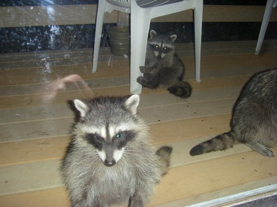 Four Seasons June Lake Cabins: Local wildlife on the deck