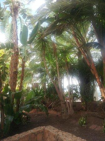 R2 Bahia Playa: vue de la terrasse de la chambre rdc