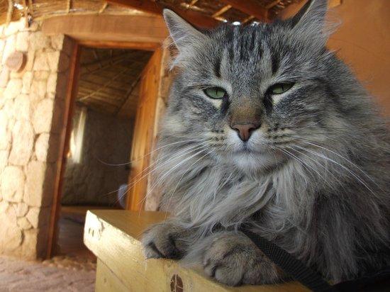 Ckamur Atacama Ethno Lodge: Sarah