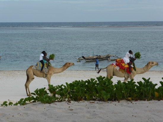 AfroChic Diani : Camel rides on the beach