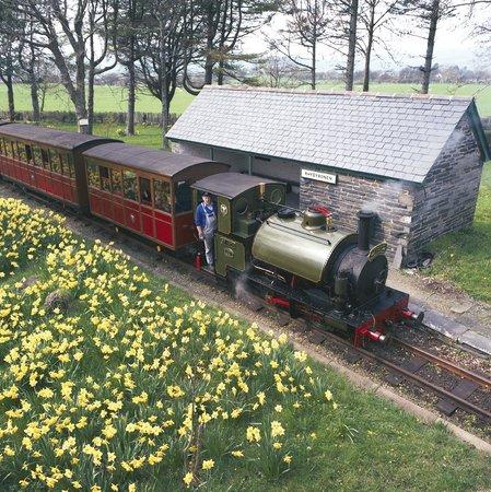 Talyllyn Railway: Spring Daffs