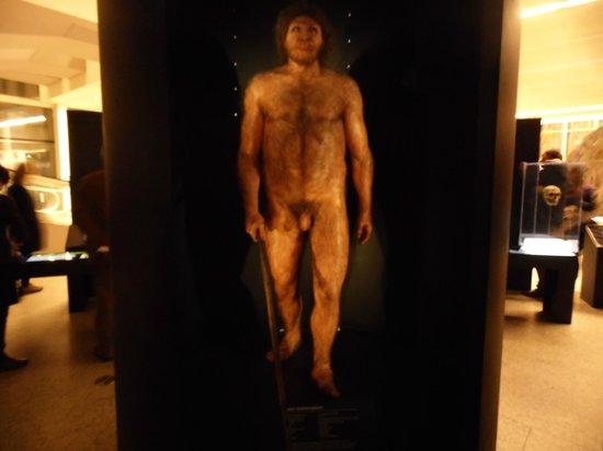Museo de la Evolución Humana: Galería de los Homínidos