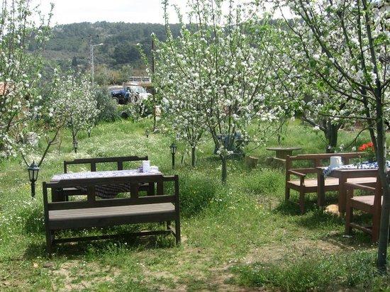 Salkim Village : bahçemiz