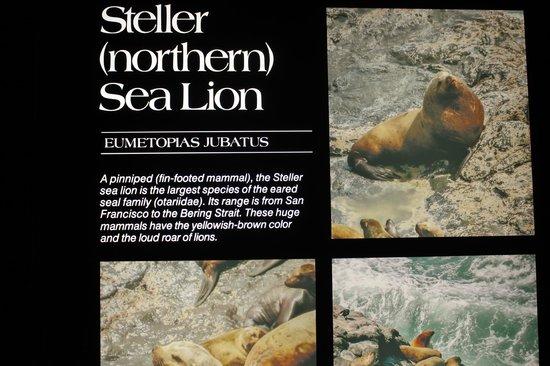 Sea Lion Caves: Informative displays