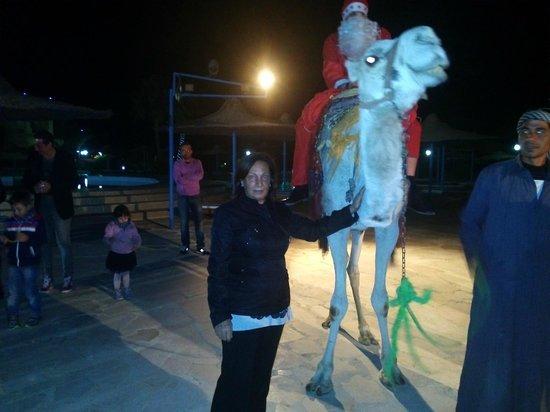 Blue Reef Red Sea Resort : senza renne ...