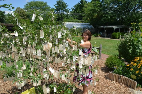 Berkshire Botanical Garden: Wishing tree