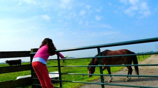 Overleekerhoeve: ponny