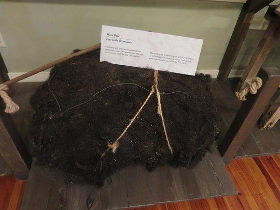 Longfellow Evangeline State Historic Site: Moss