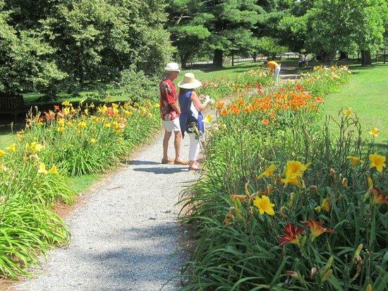 Berkshire Botanical Garden: The lilies