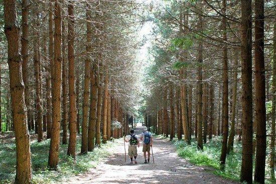 FiesoleBike Day Tours: Walking in Montesenario