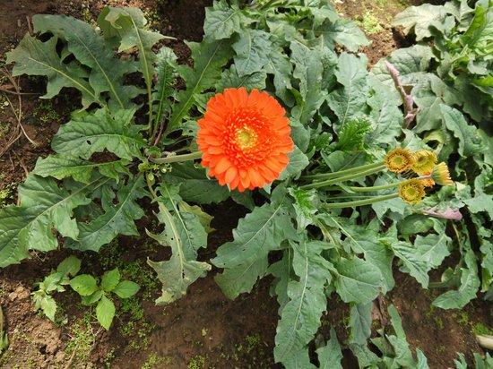 Dalat Flower Park: в естественной среде