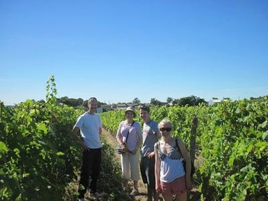 Loire Wine Tours - Day Tours: In the vineyards on a very sunny day!