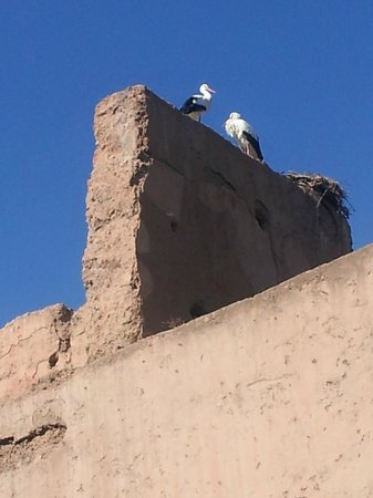 Riad Badi: The storks on the old palace walls