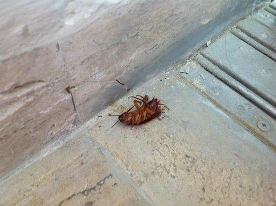 Club Regina Cancun: infested living room