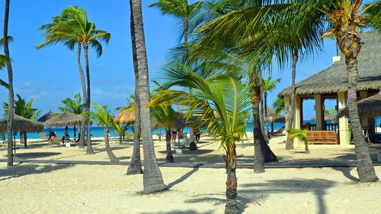 These are the grounds at Manchebo Beach Resort