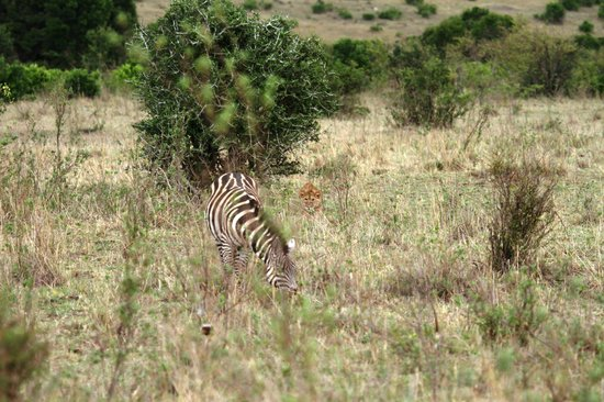 Tropical Adventure Safaris - Day Tours: training day for the cubs...