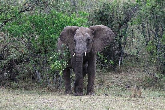 Tropical Adventure Safaris - Day Tours: elephant on day one