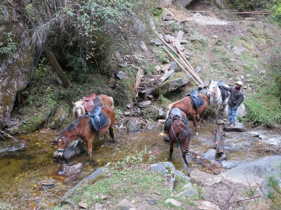 Letting the horses drink in a valley stream