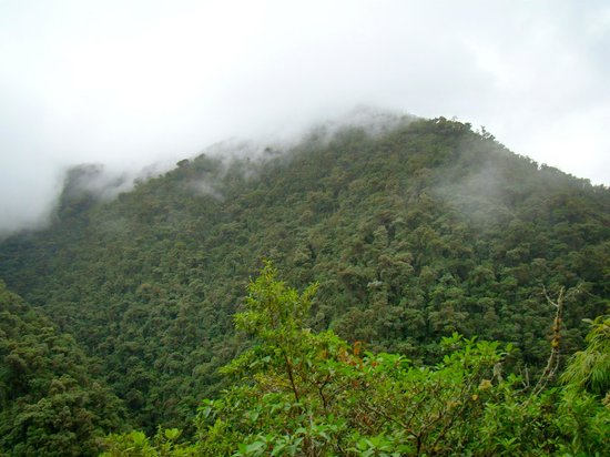 Maquipucuna Reserve & Ecolodge: primary cloud forest