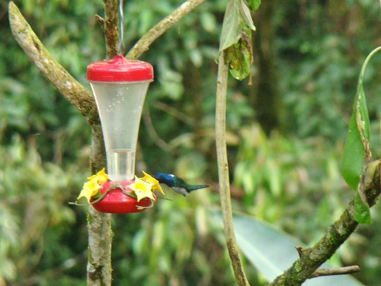 Maquipucuna Reserve & Ecolodge: lovely hummingbirds