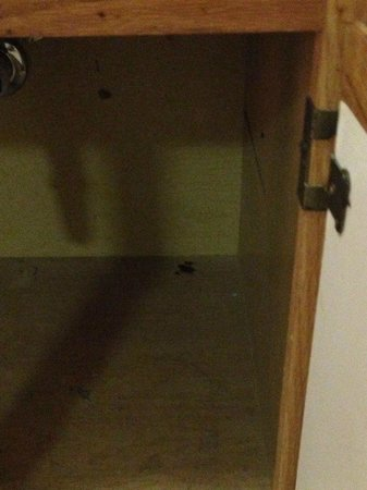 Extended Stay America - Birmingham - Inverness : roaches under the sink