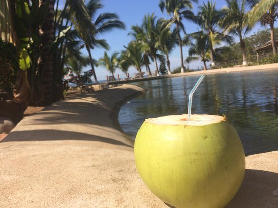Abadia: Fresh coconut water from poolside trees!