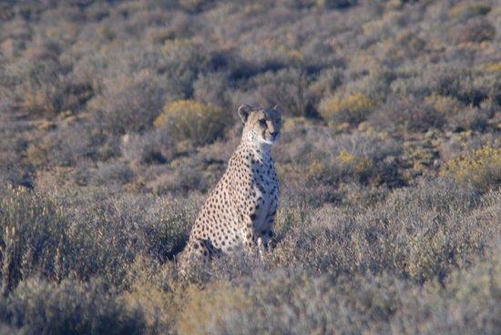 Inverdoorn Game Reserve: Cheeta