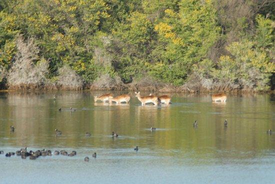 Inverdoorn Game Reserve : Safari