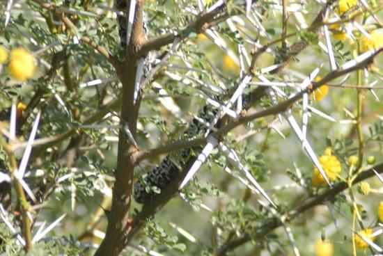 Inverdoorn Game Reserve: caterpillar
