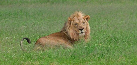 The Vuyani Safari Lodge : Just royal
