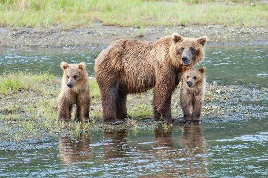 Great Alaska Adventures 사진