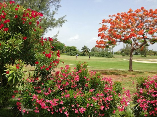 Las Gaviotas Hotel+Rent Aparment: Jardines