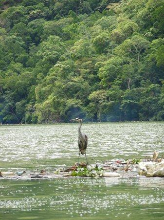Cañón del Sumidero: #