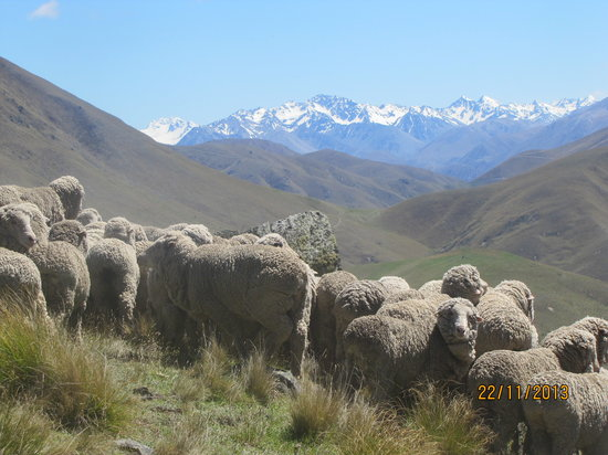 Dunstan Downs High Country Sheep Station: Mustering with a view