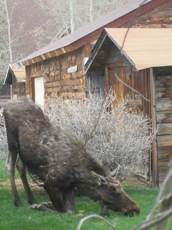 Daven Haven Lodge & Cabins: Local Wildlife